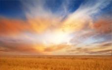 阳光下的麦田图片
