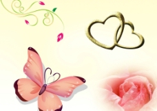 蝴蝶 连心 玫瑰花图片