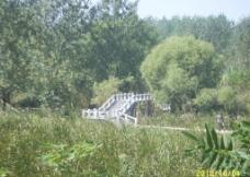 林中小桥图片