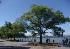 湖滨公园风景图片