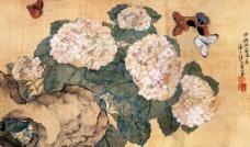 绣球蝴蝶图片