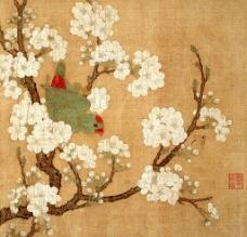 梨花鹦鹉图图片