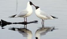 两只鸟图片