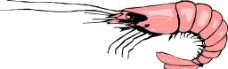 虾矢量图图片