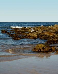 海岸风光图片