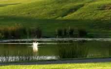 草地和水图片