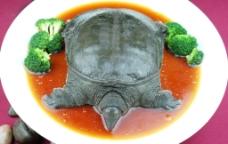 生炒野生甲鱼图片