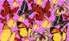 五款梦幻蝴蝶图片