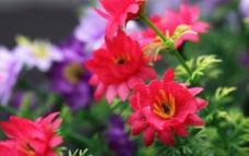 高清装饰花朵图片