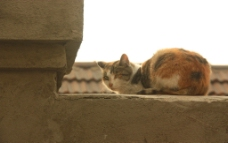 猫的故事图片
