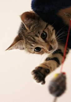 貓兒寫真图片