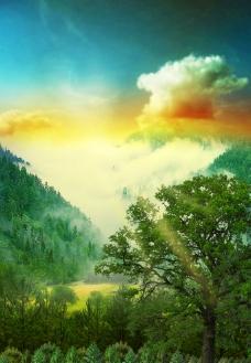千树成林图片