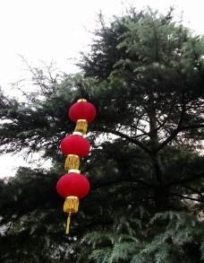 树上的红灯笼图片