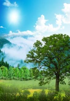 树的风景图片