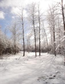 冬季美景图片