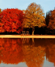 秋天的风景和落叶图片