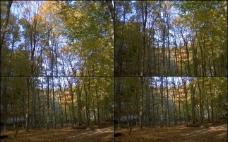 竹林高清视频图片