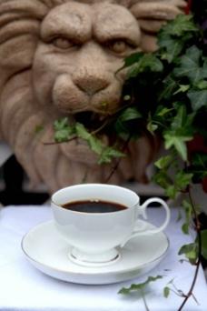 咖啡  蓝山咖啡