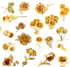 黄金玫瑰图片