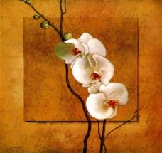 油画蝴蝶兰图片