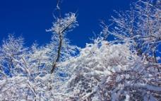 雪树蓝天 jpg图片