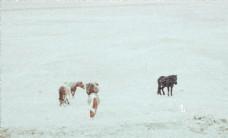 冰天雪地 生存图片
