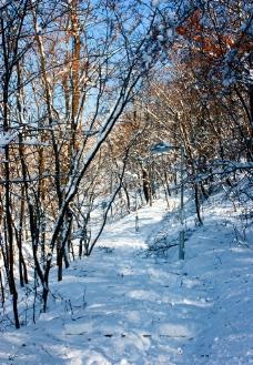 丛林雪路图片