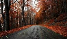 枫叶道路图片