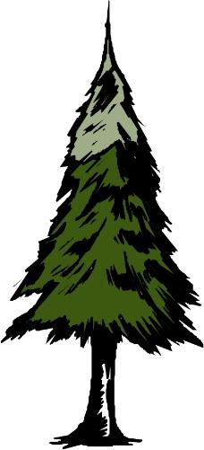 树木1164