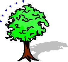 树木1590