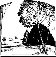 树木1123