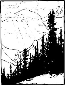 树木1107