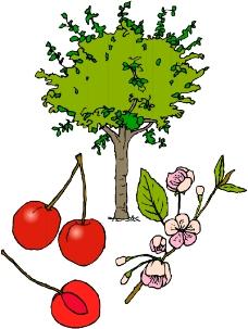 树木1304