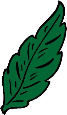 树木1436