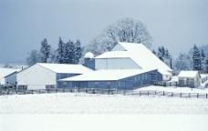 下雪的农场图片
