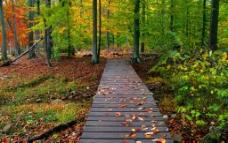 树林落叶图片