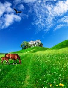 草原风景图片