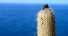 海边仙人掌图片