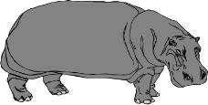 野生动物4170