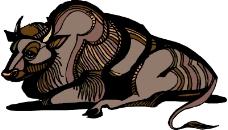 野生动物0623