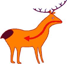 野生动物1131