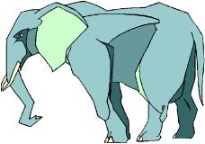 野生动物3568
