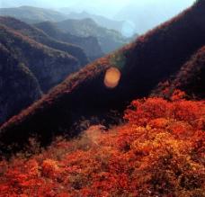 青天河红叶图片