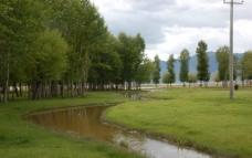 草坪树立和小河图片