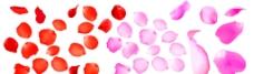 玫瑰花瓣匯總圖片