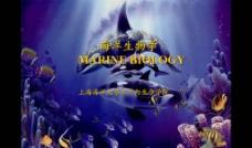 海洋生物学 课件图片
