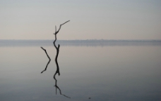 水中的枯枝图片