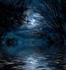梦幻圆月夜图片