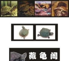 异宠藏龟阁图片