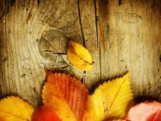 秋天落叶与木板图片